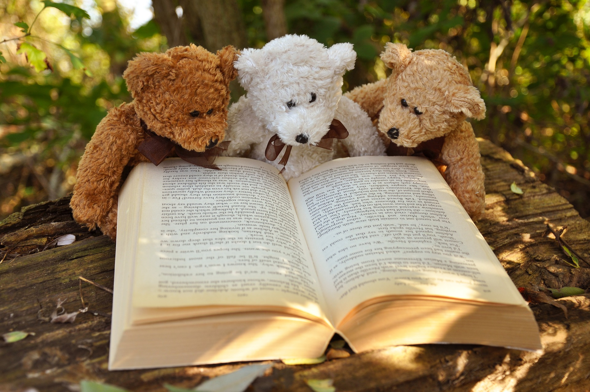 teddy-bear-book-read