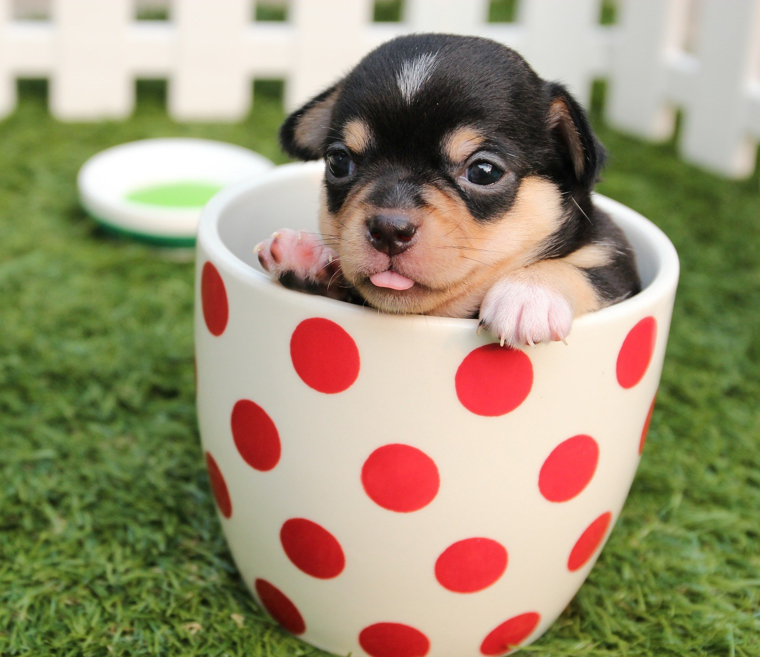 dog-cup